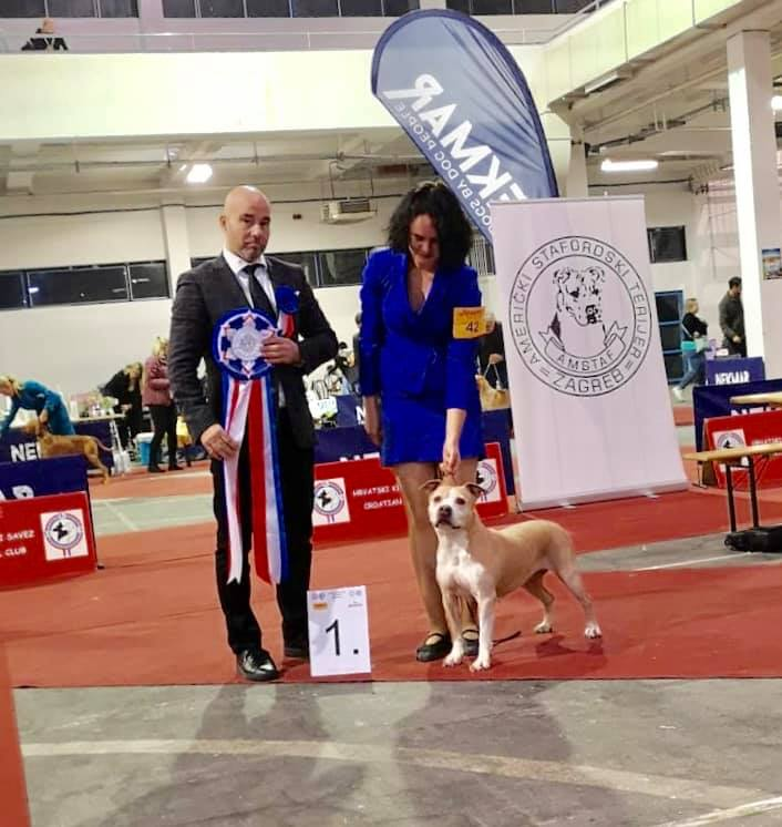 Amstaff National Specialty Zagreb 22/11/2019